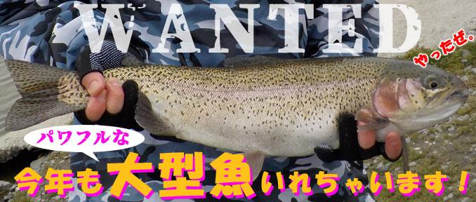 アルクスポンド 大型魚